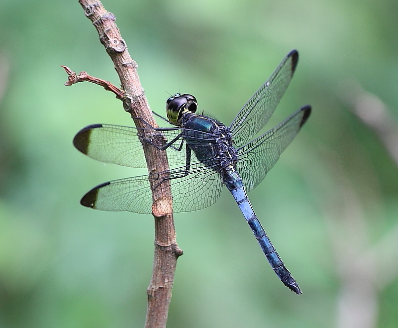 Male - side view